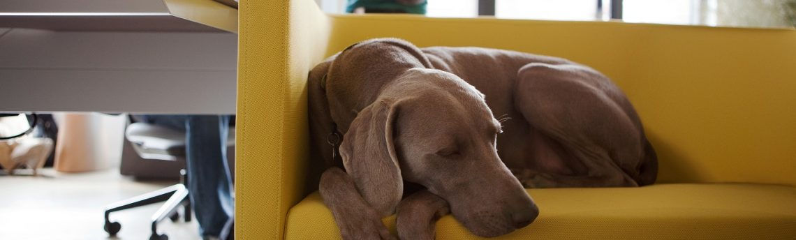 Emmener son chien au bureau : toutes les bonnes raisons !